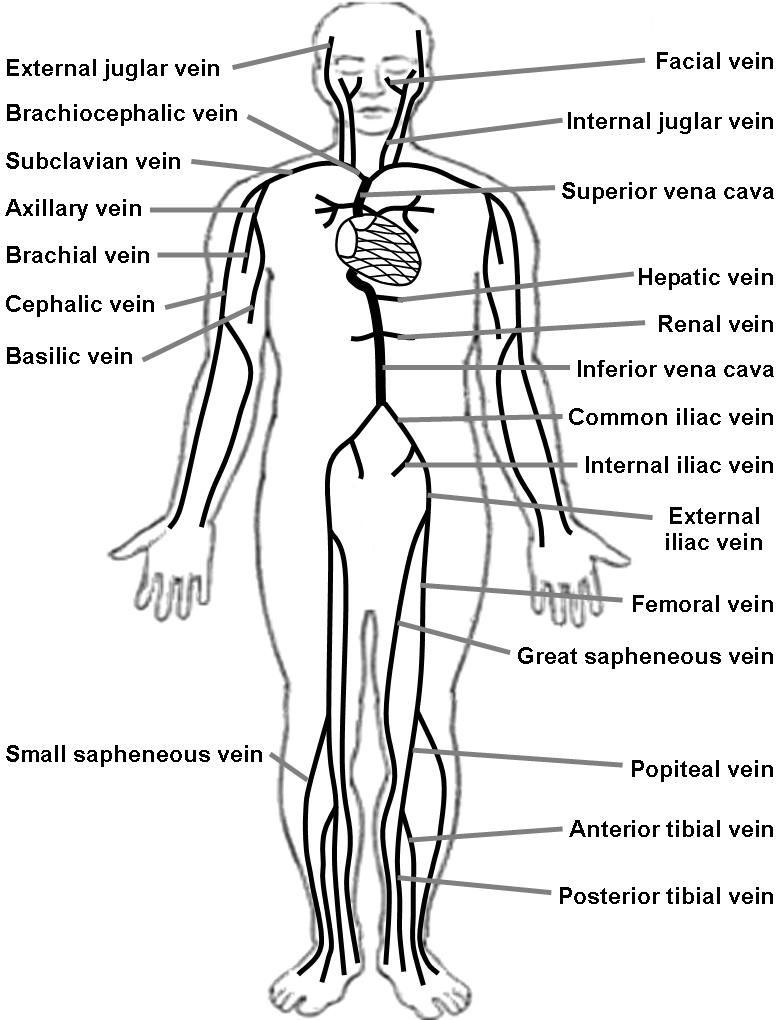 Labeled Diagram Of The Lymphatic System . Labeled Diagram