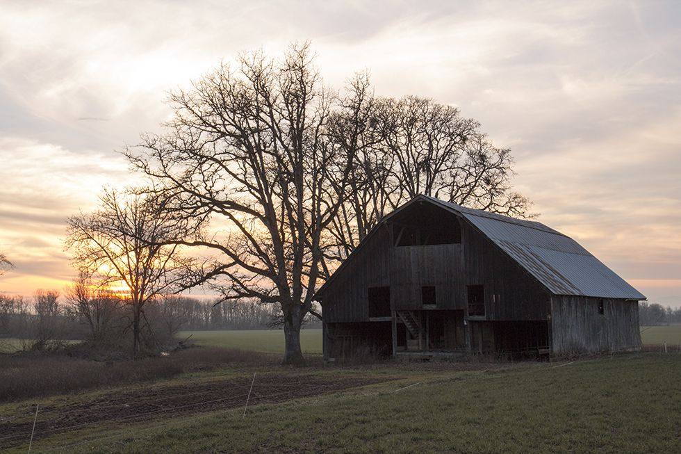 Winter Sunset On Old Barn Outside Of Brownsville Oregon In