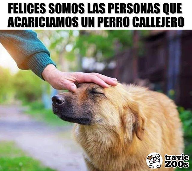 Alegria Instantanea Dog Perro Caricia Amor Animales Callejero Funny Animal Memes Cute Animals Cute Baby Animals