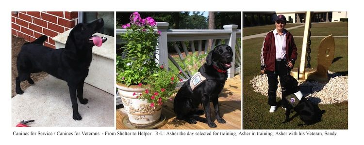 From Shelter To Helper Asher Was Selected From New Hanover County