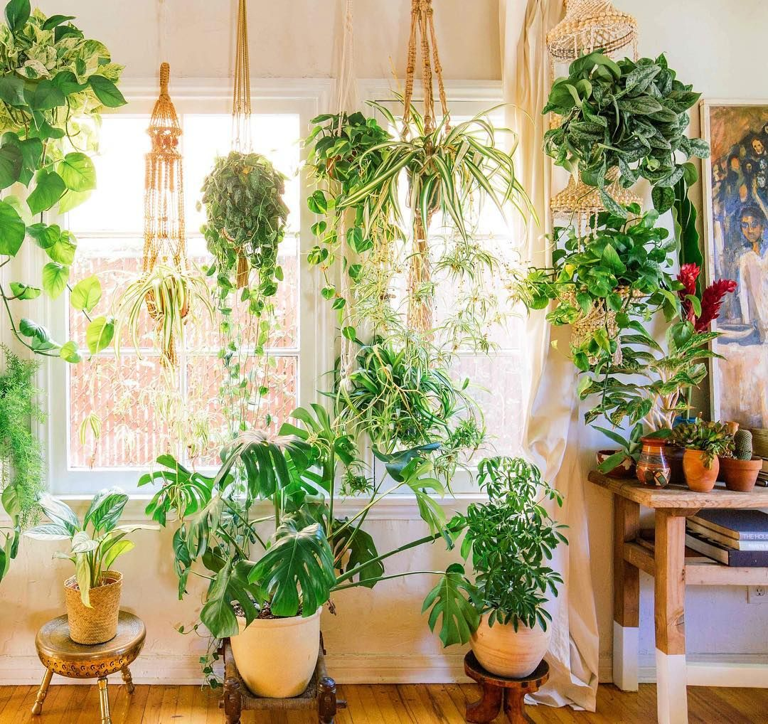 Pin by Iris on Home in 2019 | Plants, Magical home, Plant decor