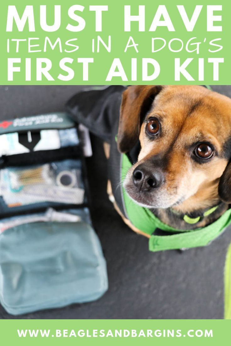 Must Have Items for Your Dog's First Aid Kit {Stocking