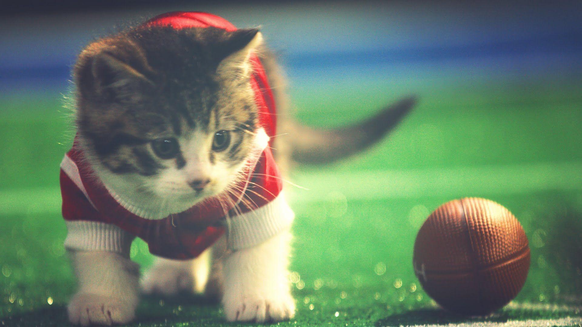 Cute Kittens Play Football Kittenbowl Kittens Cutest Kittens Playing Kitten Photos