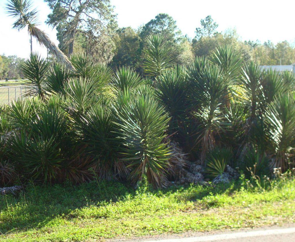 Drought Tolerant Plants For Your Florida Native Landscape Plants