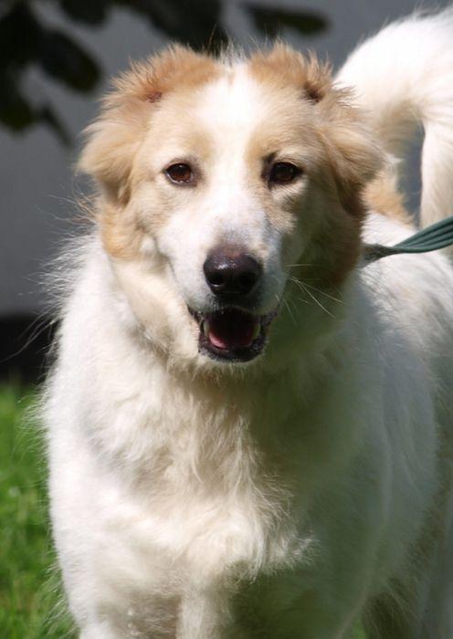 Rostocker Tierschutzverein E V Tierheim Schlage Hunde Seite 4 Tierheim Tiere Hunde Fotos