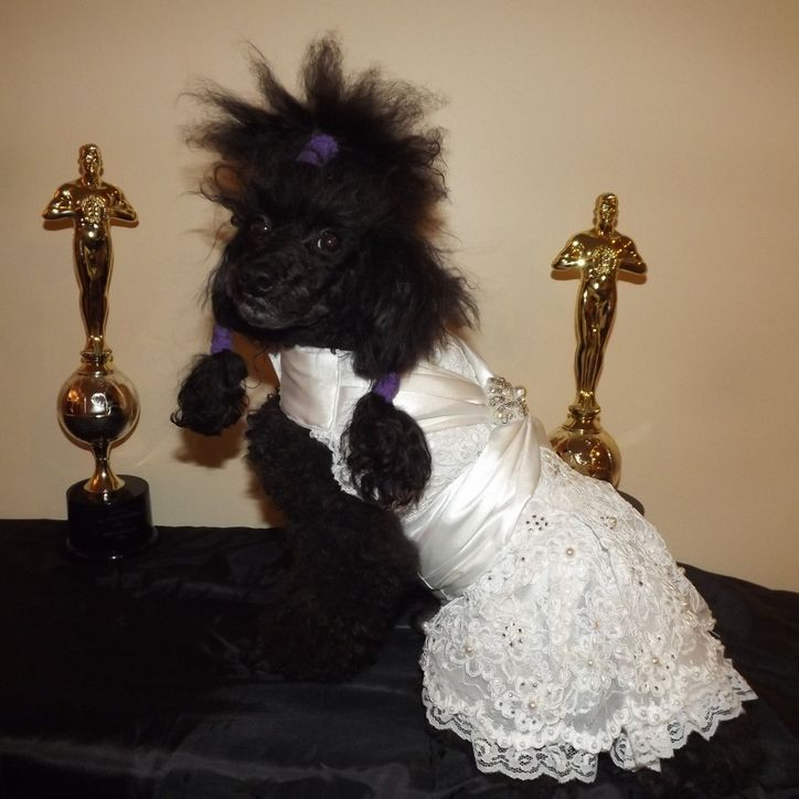 11 Photos Of Dogs Wearing Wedding Dresses Will Be The Best Thing That Ever Hened To You Srsly It S All Downhill From Here