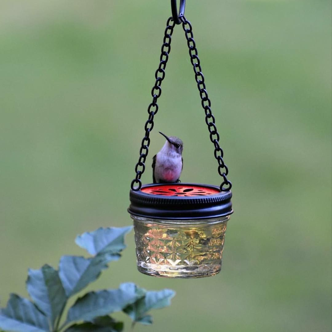 Is this not the cutest? ️jellyjar diy hummingbirdfeeder