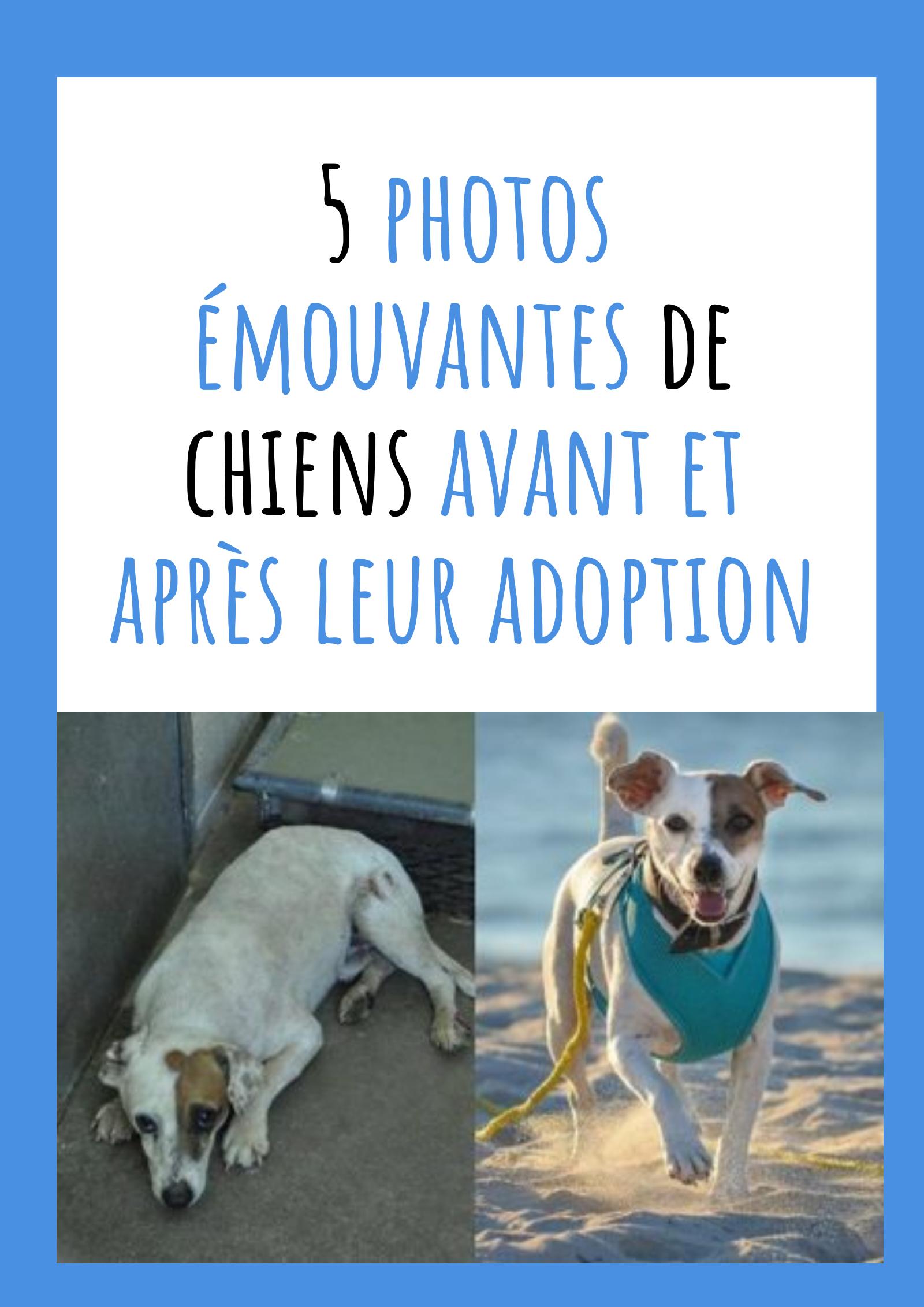 5 Photos Emouvantes De Chiens Avant Et Apres Leur Adoption Histoires De Chiens Chien Adopter Un Chien