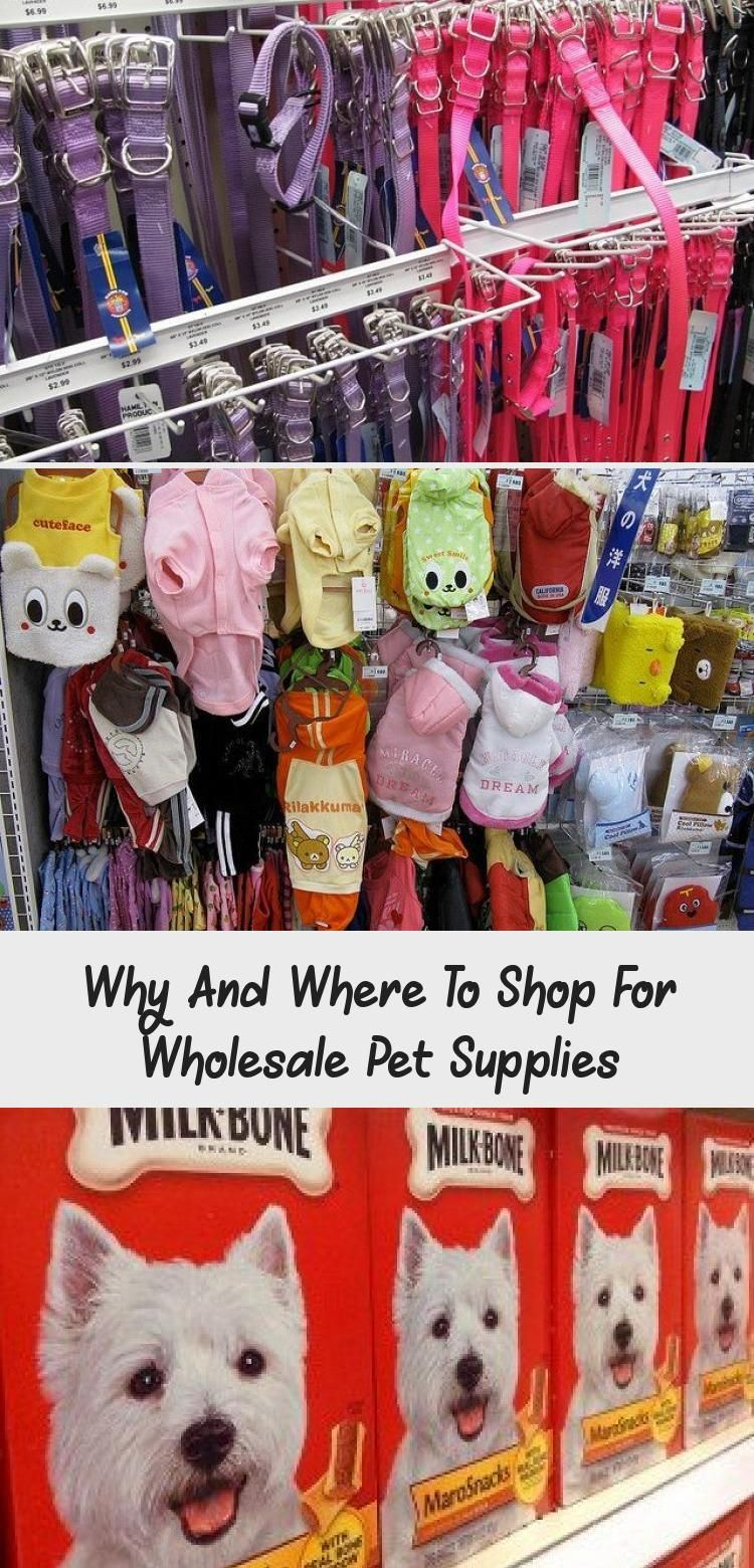 Why And Where To Shop For Wholesale Pet Supplies In 2020 Pet