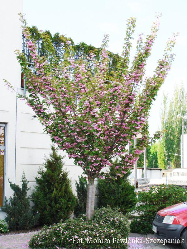 Zdja Cie Nr 6 W Galerii Wiosenny Balkon A Deccoria Pl Plants Cie