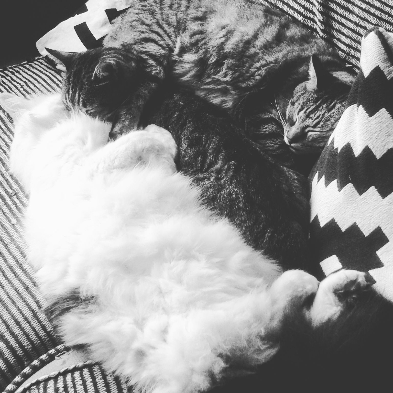Sieste de chats