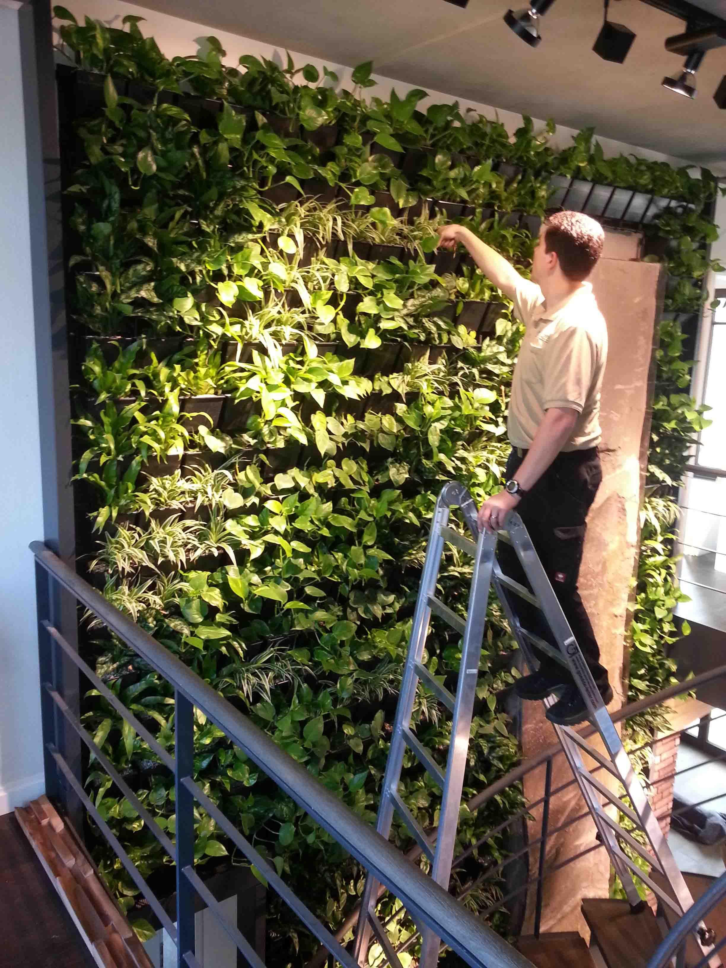 Die grüne Wand Aufbau und Kontrolle für Einrichtung einer grünen Wand
