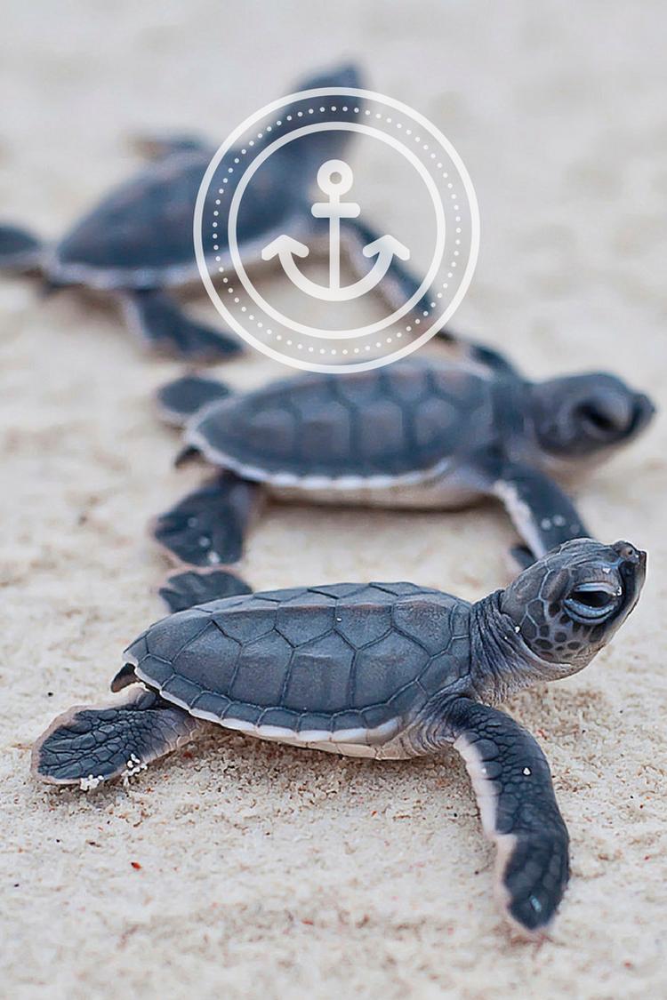 turtles sand summer wallpaper phone background