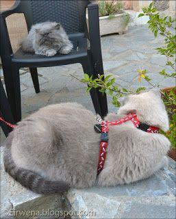 Journal d'un chat : les aventures d'Eirwena: Eirwena et Messiaen (acte 10)