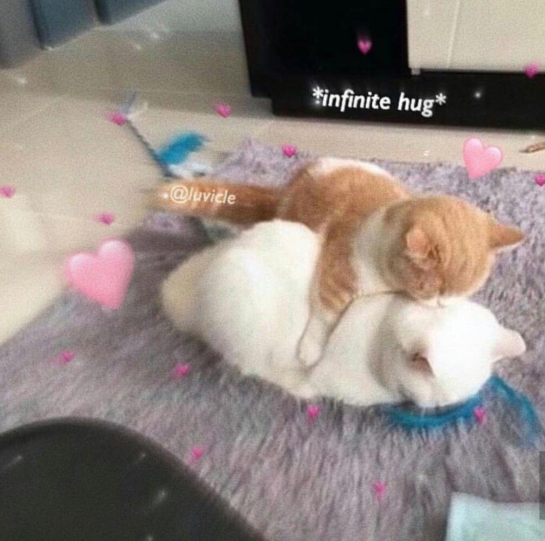 Amor Y Abrazos Sin Fin Para Ti Cute Love Memes Cute Cat Memes Cute Memes