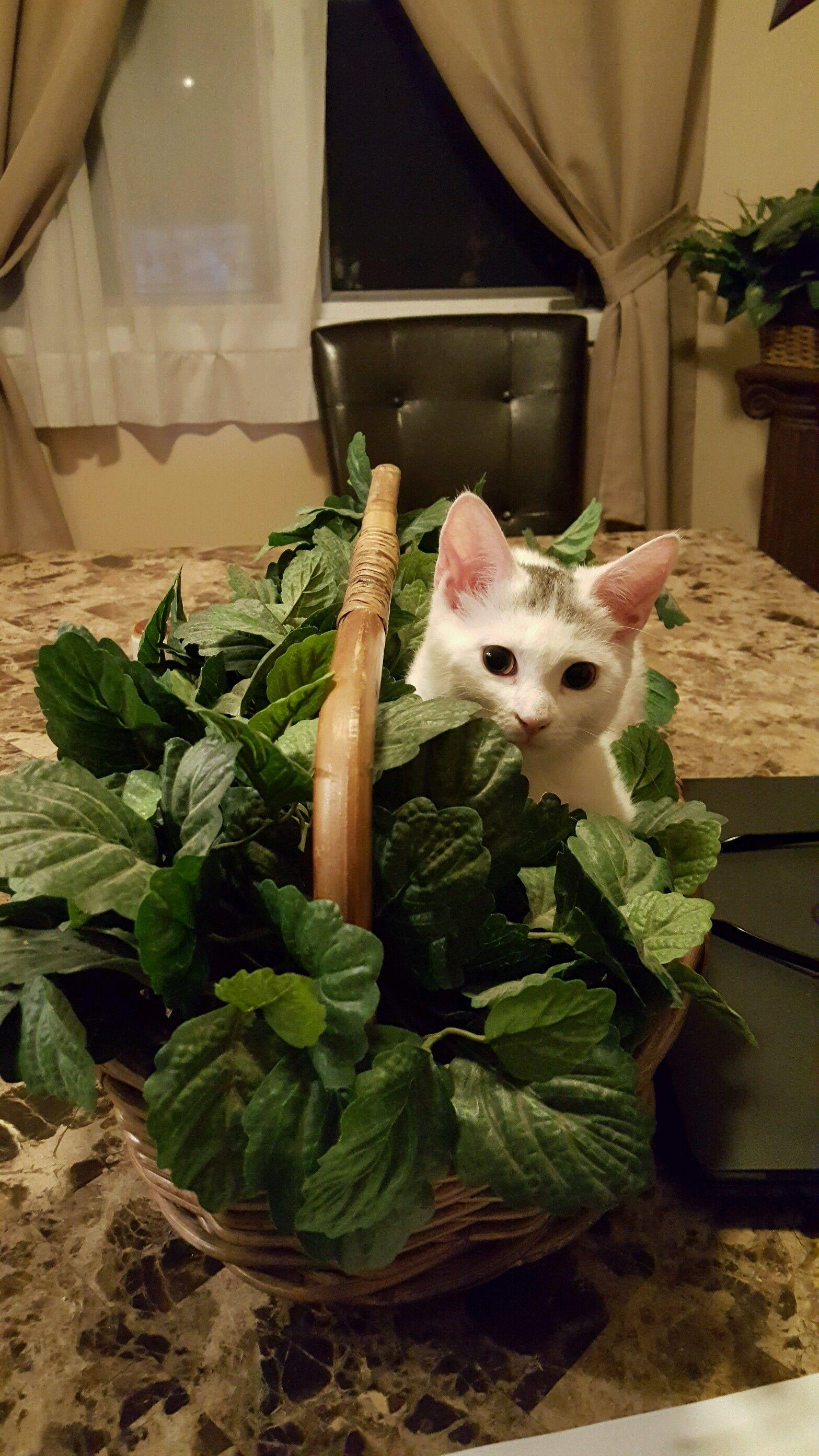 My new Kitten Kate