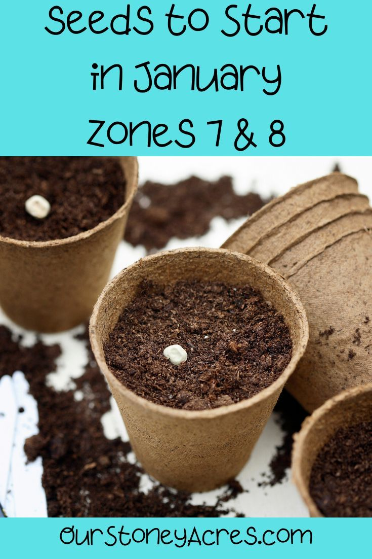 What to Plant in January - Zones 7 and 8 in 2020 | Food ...
