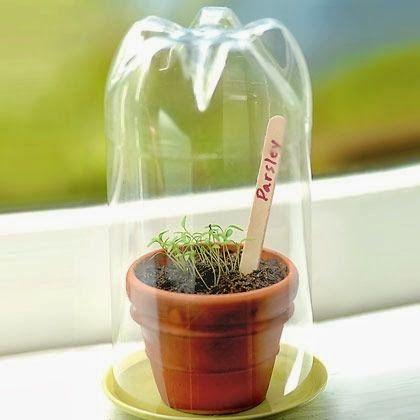 Photo of Mini Pet Bottle Greenhouse
