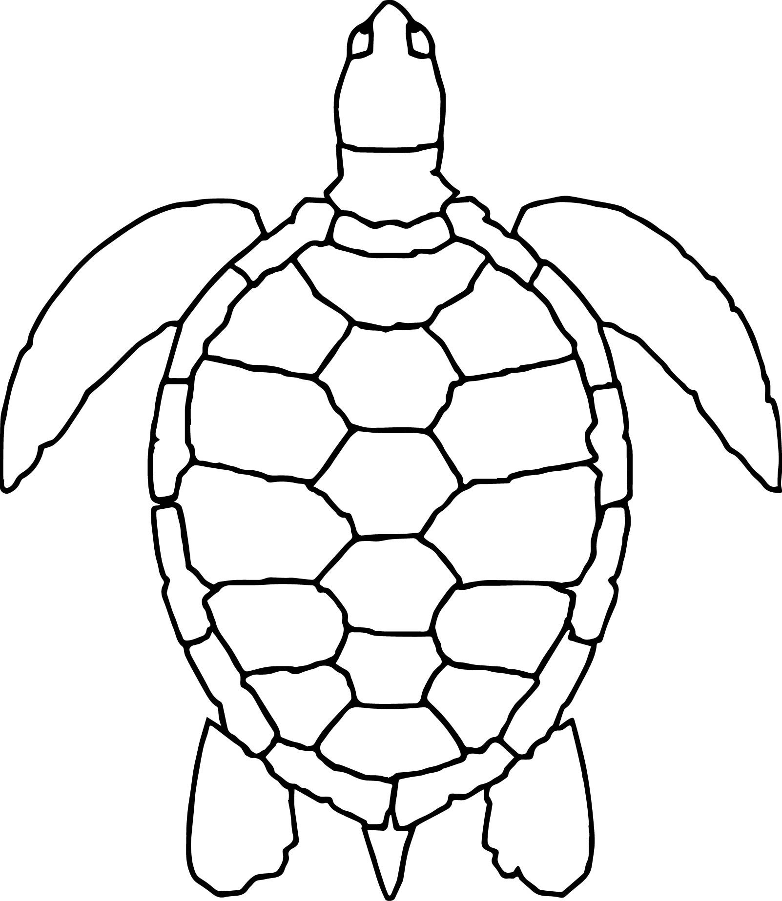 Awesome Sea Animals Turtle Coloring Page With Images Turtle