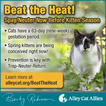 It Is Time To Start Getting Ahead Of Prime Kitten Season By