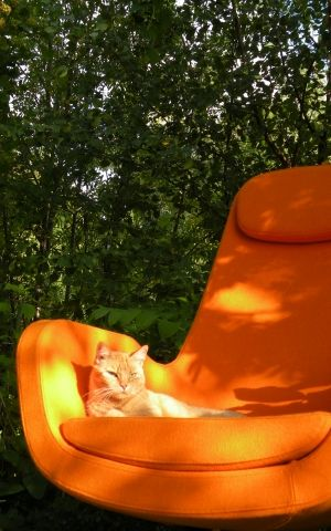 orange puddytat on an orange mod chair = heaven