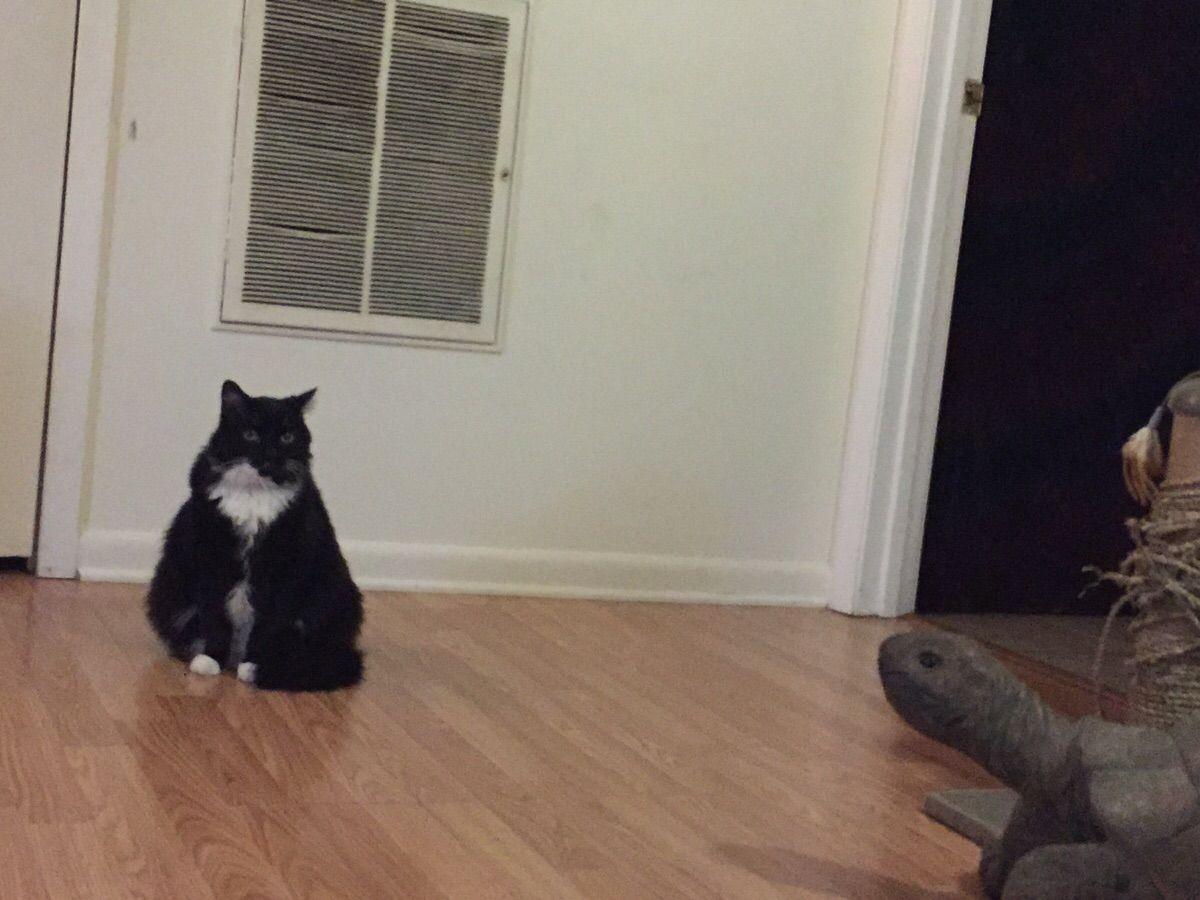 Awkward Turtle Cat #Followme #CooliPhone6Case on #Twitter #Facebook #Google #Instagram #LinkedIn #Blogger #Tumblr #Youtube