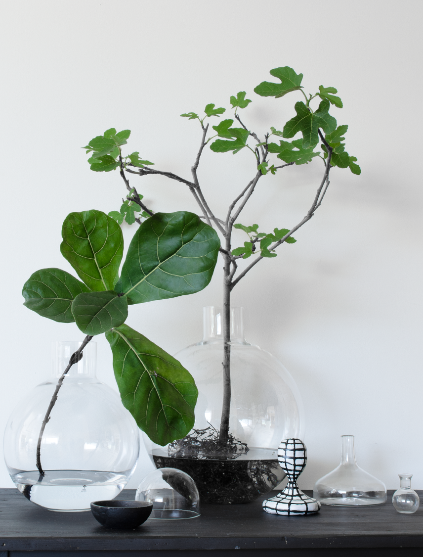 Large Vases With Single Branches