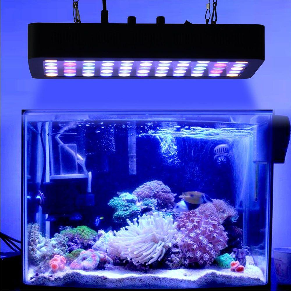 Dalua On Instagram The Reef Of Richard Miller It Exclusively By Illumagic Blaze X 72 Monster Lights In 2020 Freshwater Plants Marine Aquarium Aquarium