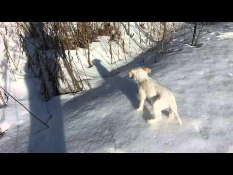 Alba 20 03 2016 Kevatpaivantasaus Alba Outdoor Snow