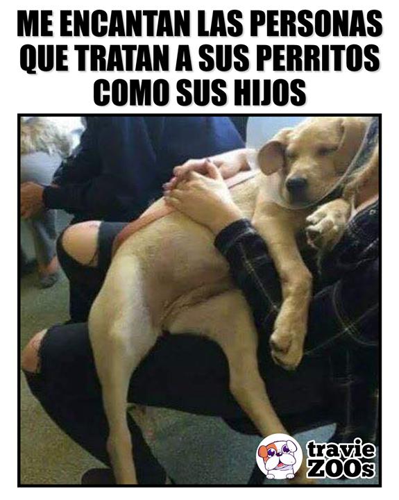 Si Asi De Cuidadosos Son Con Sus Mascotas Imaginate Como Seran Cuando Tengan Hijos Humor De Mascotas Perros Frases Animales Frases