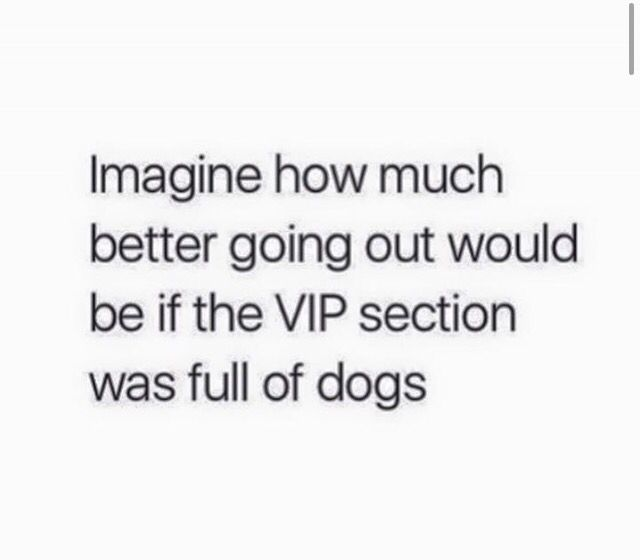 Dogs
