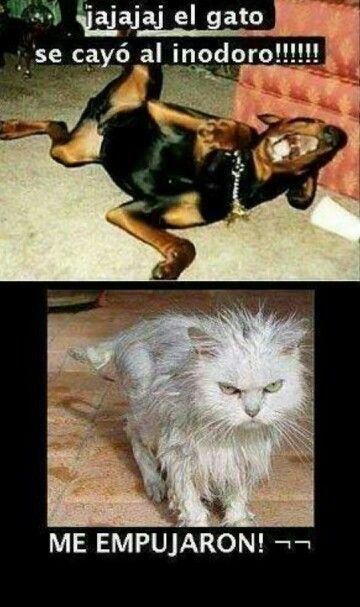 Videoswatsapp Com Imagenes Chistosas Videos Graciosos Memes Risas Gifs Graciosos Chistes Divertidas Chistes De Perros Humor Divertido Sobre Animales Meme Gato