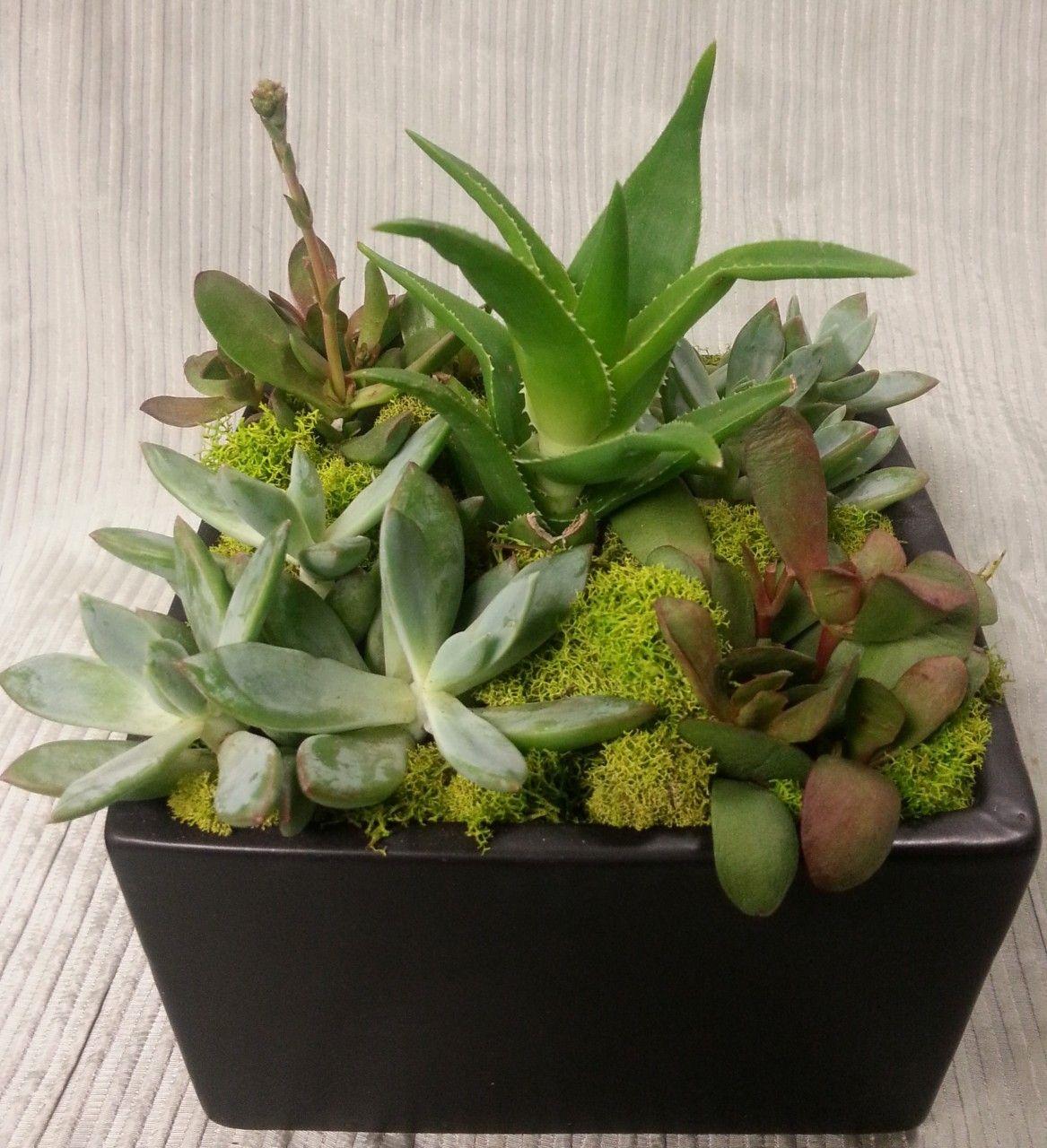 A succulent garden succulents garden flower delivery