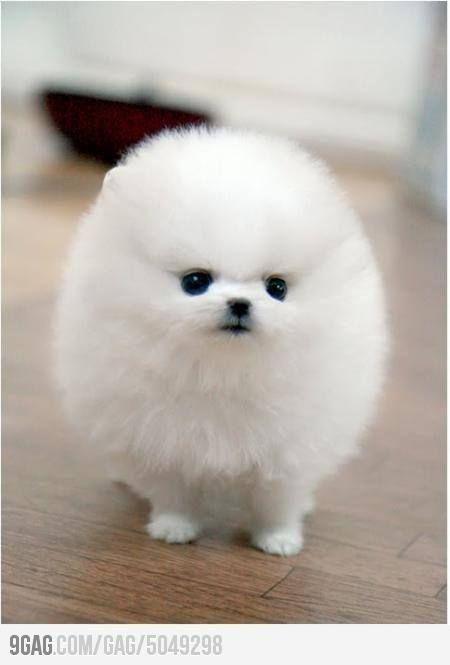 Super Fluffy Dog Cute Animals