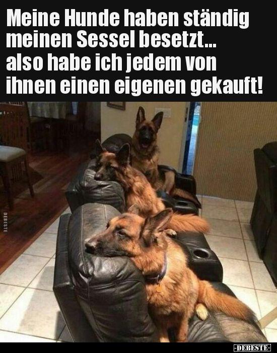Meine Hunde haben ständig meinen Sessel besetzt... also.. #animalesbebébonitos