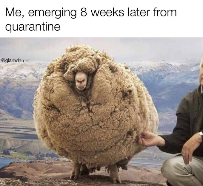 33 Accurate Memes About Our New Quarantined Reality