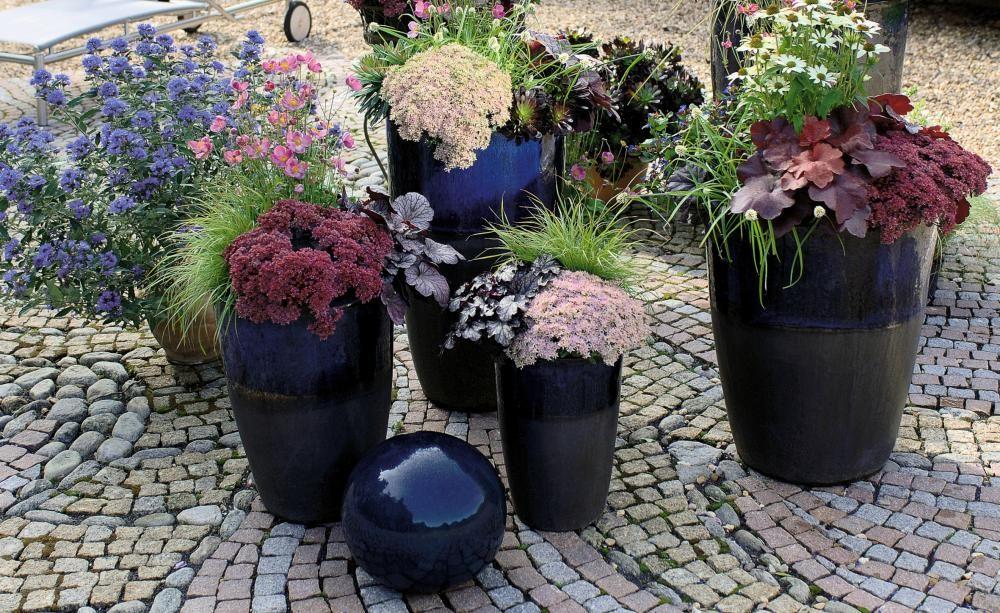 Herbstzauber Für Garten Und Balkon | Herbst, Rüben Und Garten Pflanzen Topfen Kubeln Terrasse