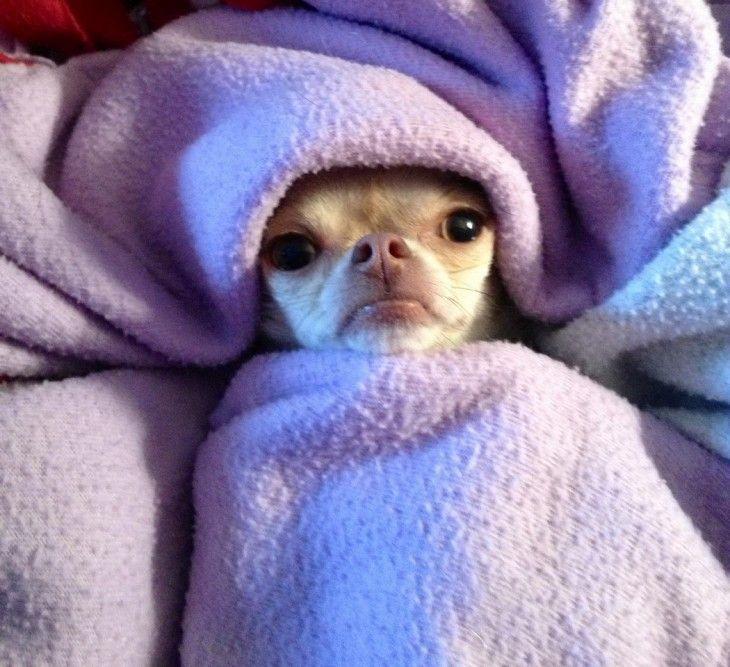 21 Cosas Que Solo Las Personas Que Siempre Tienen Frio Podran Entender Memes De Frio Animales Bonitos Humor De Perros