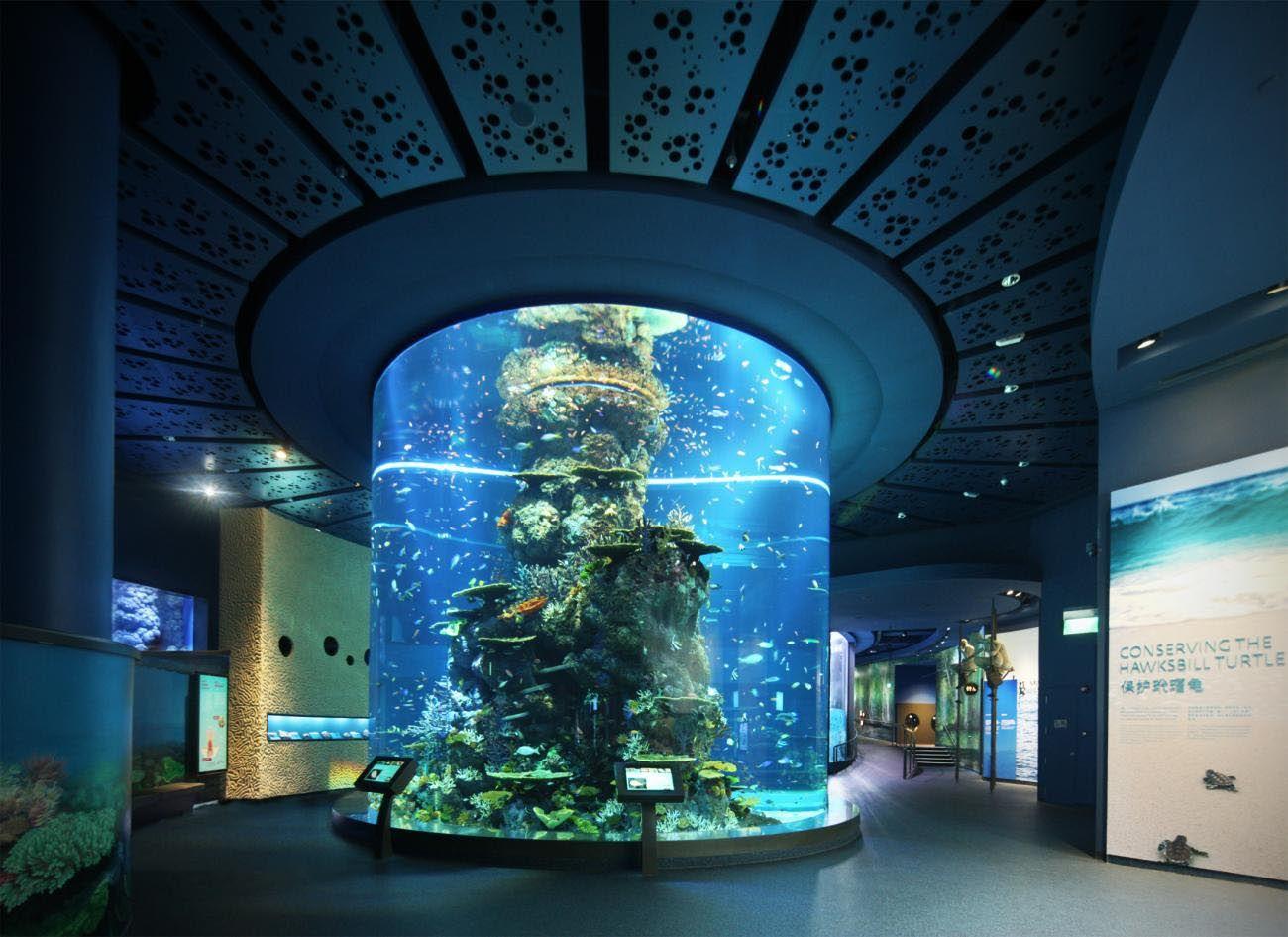 Marine aquarium fish singapore aquarium fish pinterest for Aquarium interior decoration