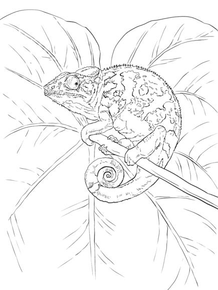 Common Chameleon Coloring page | Paper Art | Pinterest | Chameleons ...