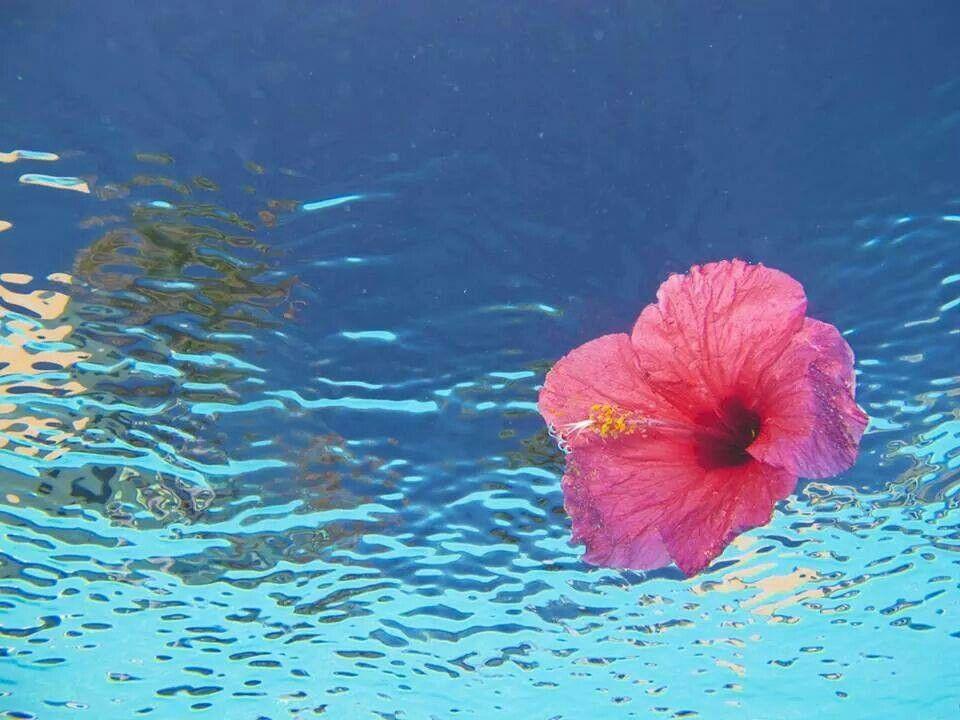 Caribe flower