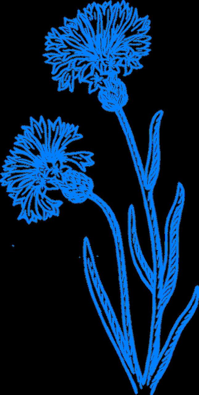 Kwiat Niebieski Kwiaty Wiosna Lato Kwiatowy Nelke Tattoo Nelken Hochzeit