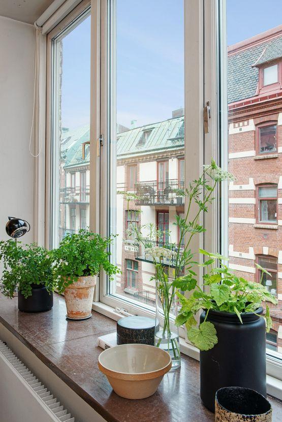 Piso pequeño con amplio salón y terraza comunitaria Kitchen plants