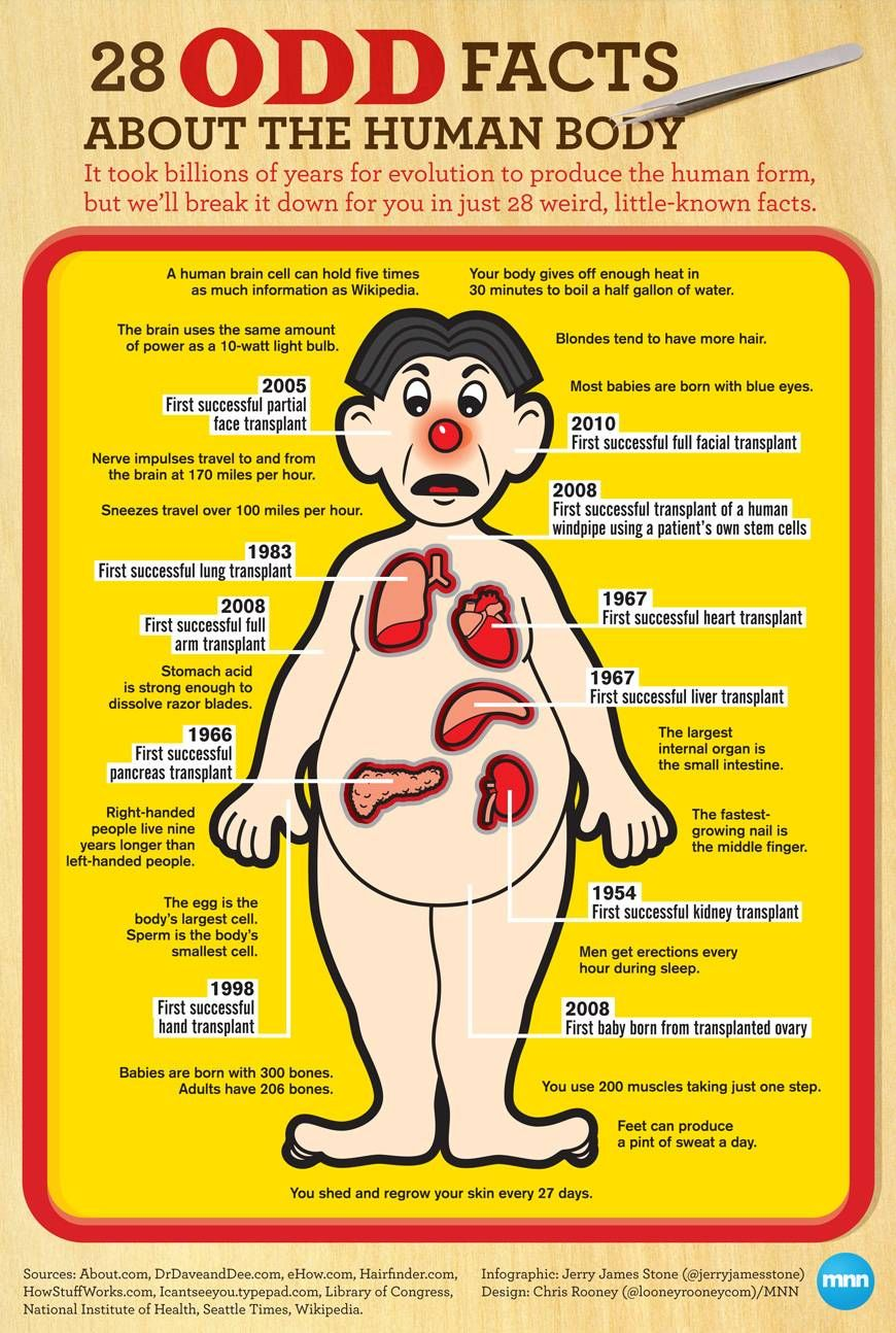 Infographic: 28 odd facts about the human body