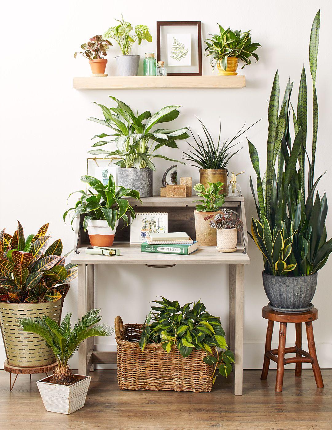 2f1ba25e44187cf200259e7082cd5490 - Better Homes And Gardens Potted Plants Ideas