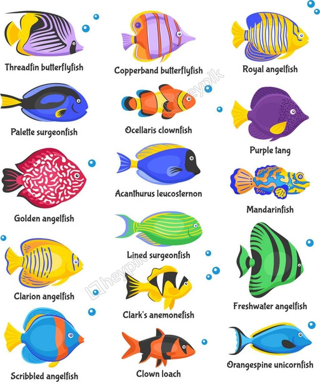 Beautiful Tropical Fish Vector Fish Icon Beautiful Tropical Fish Tropical Fish