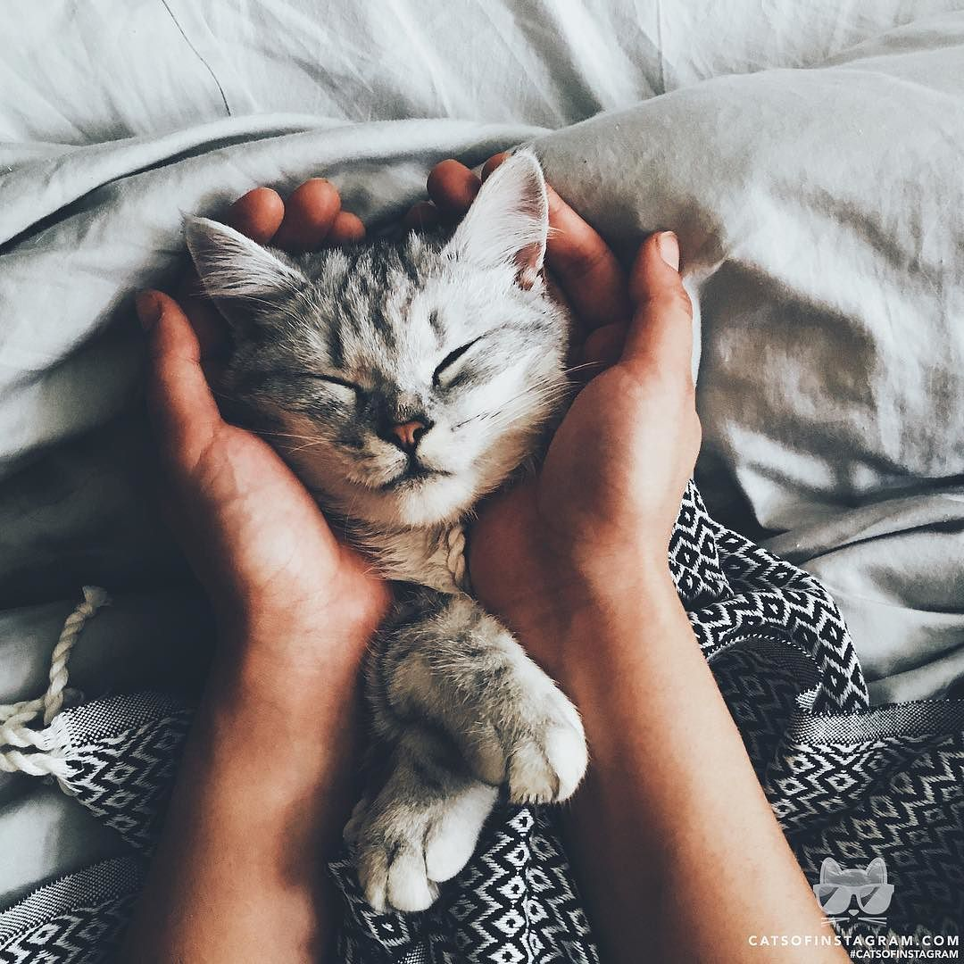 Cats of Instagram Cute animals, Kittens cutest, Cute cats
