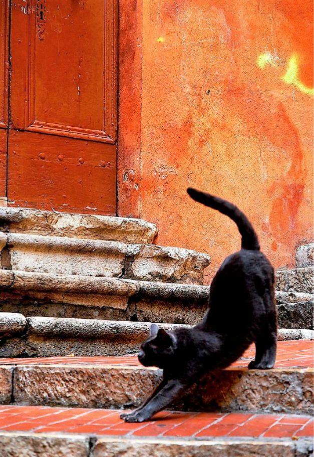 zdarma video černé kočičky