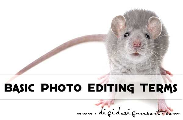 Basic Digital Photo Editing Terms You Need to Know   Photo ...