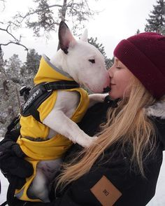 1000+ images about Guus ♥ Bull Terriers on Pinterest